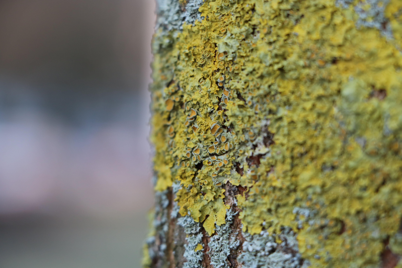 Green and Grey Tree Bark