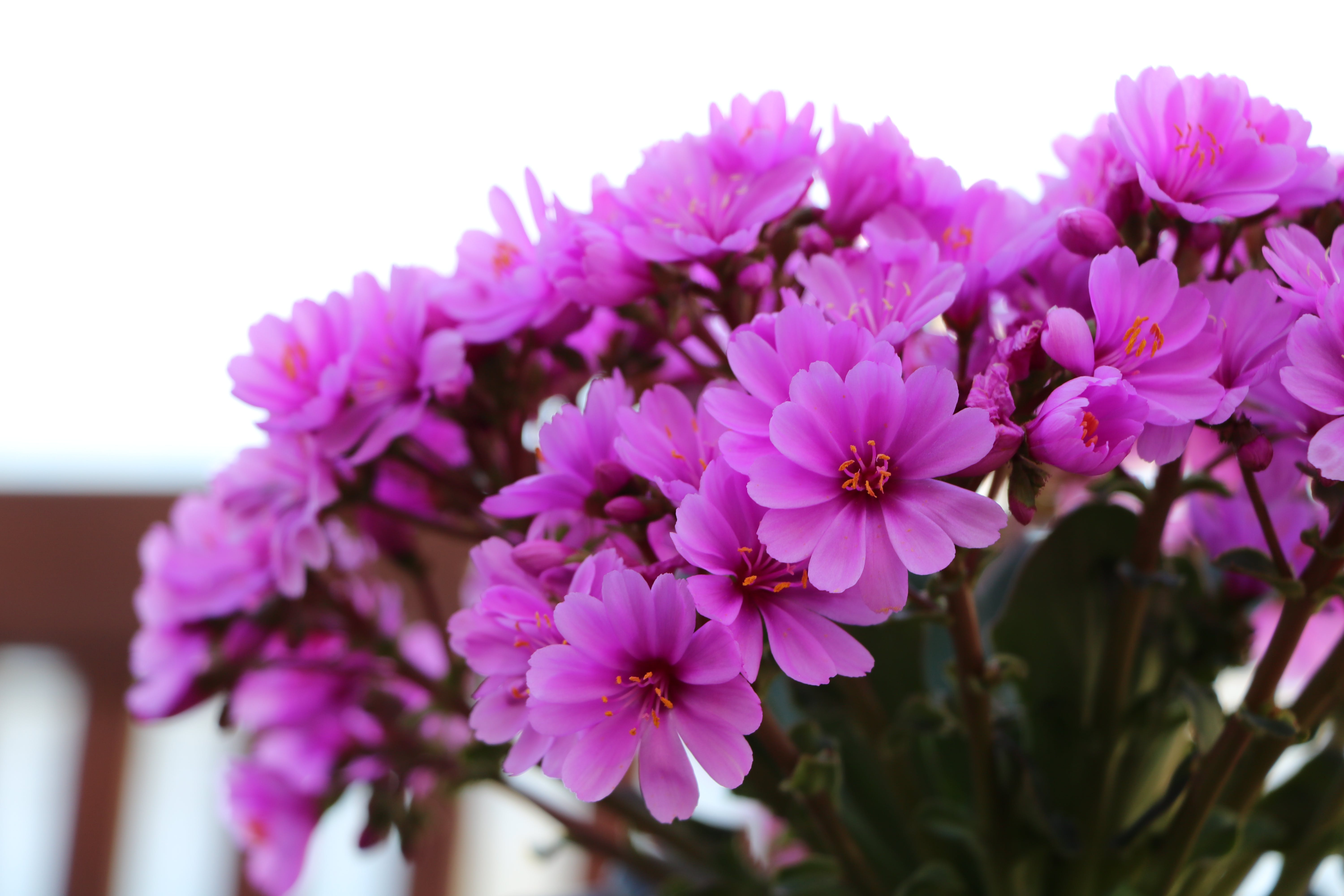 Close-Up Photo of Purple Flowers