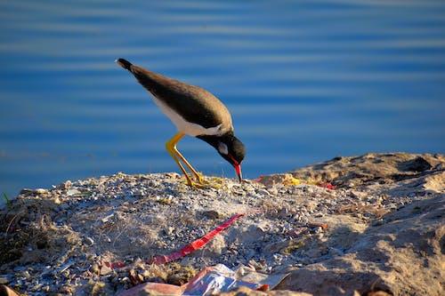 Δωρεάν στοκ φωτογραφιών με γαλάζια νερά, ζωή στη φύση, ομορφιά στη φύση, ταΐστρα πουλιών