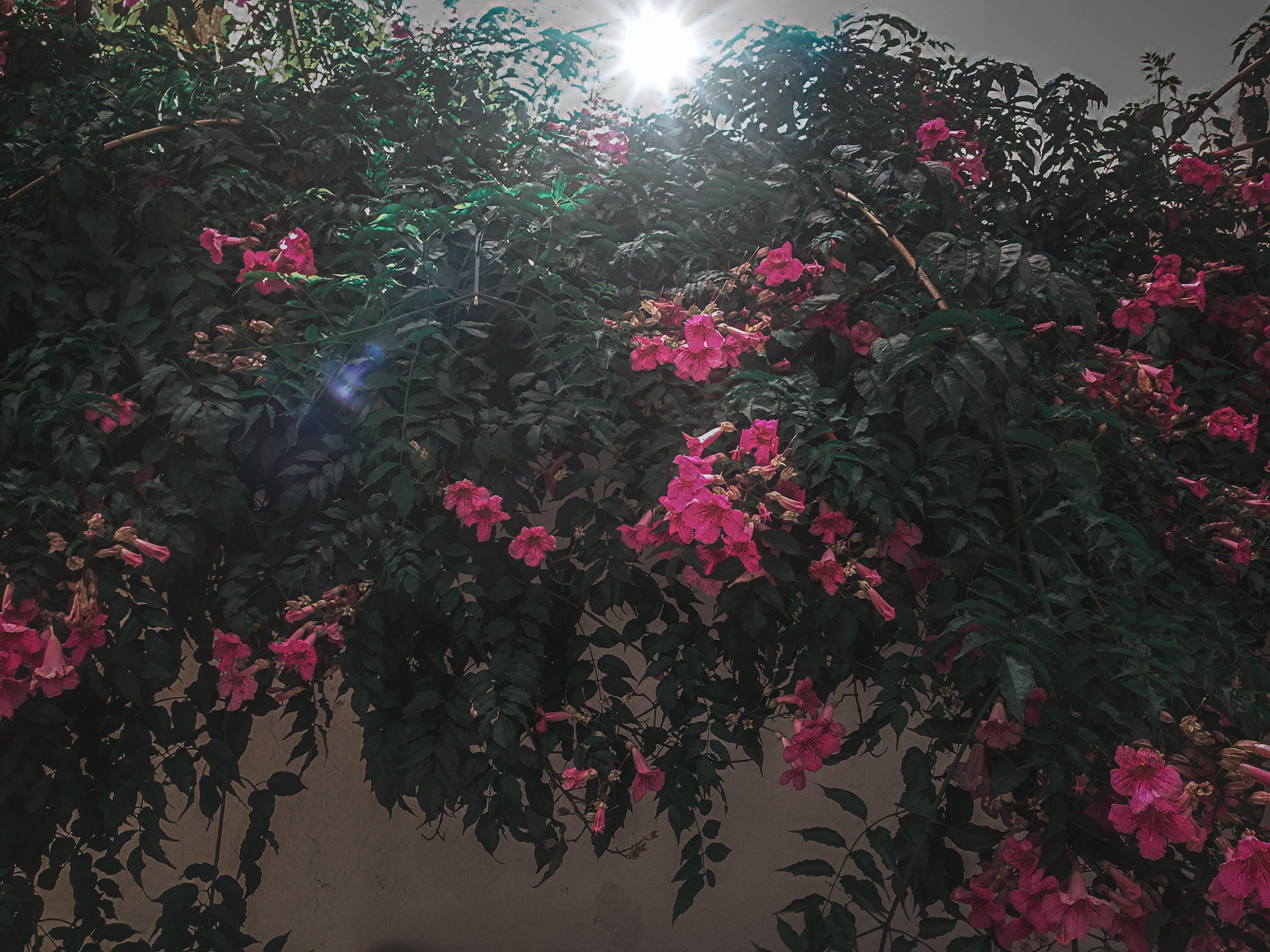 Free stock photo of beautiful flower, flower, nature, nature photography