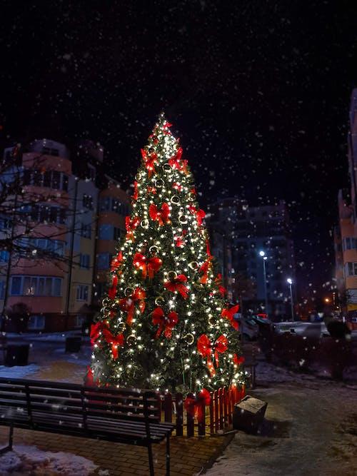 Gratis stockfoto met achtererf, buiten, kerstboom, Kerstmis