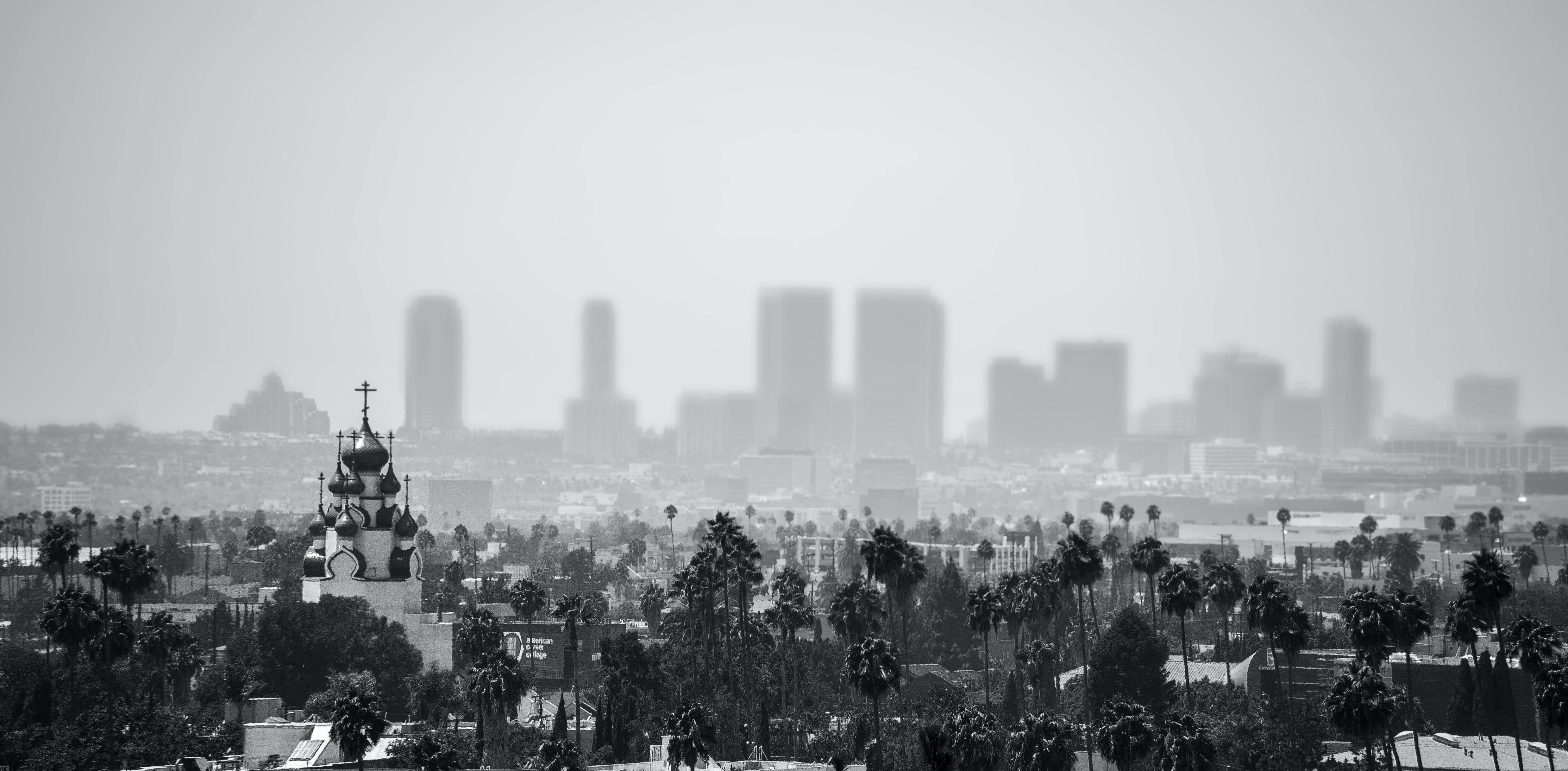 Grayscale Photo of Trees and Buildings