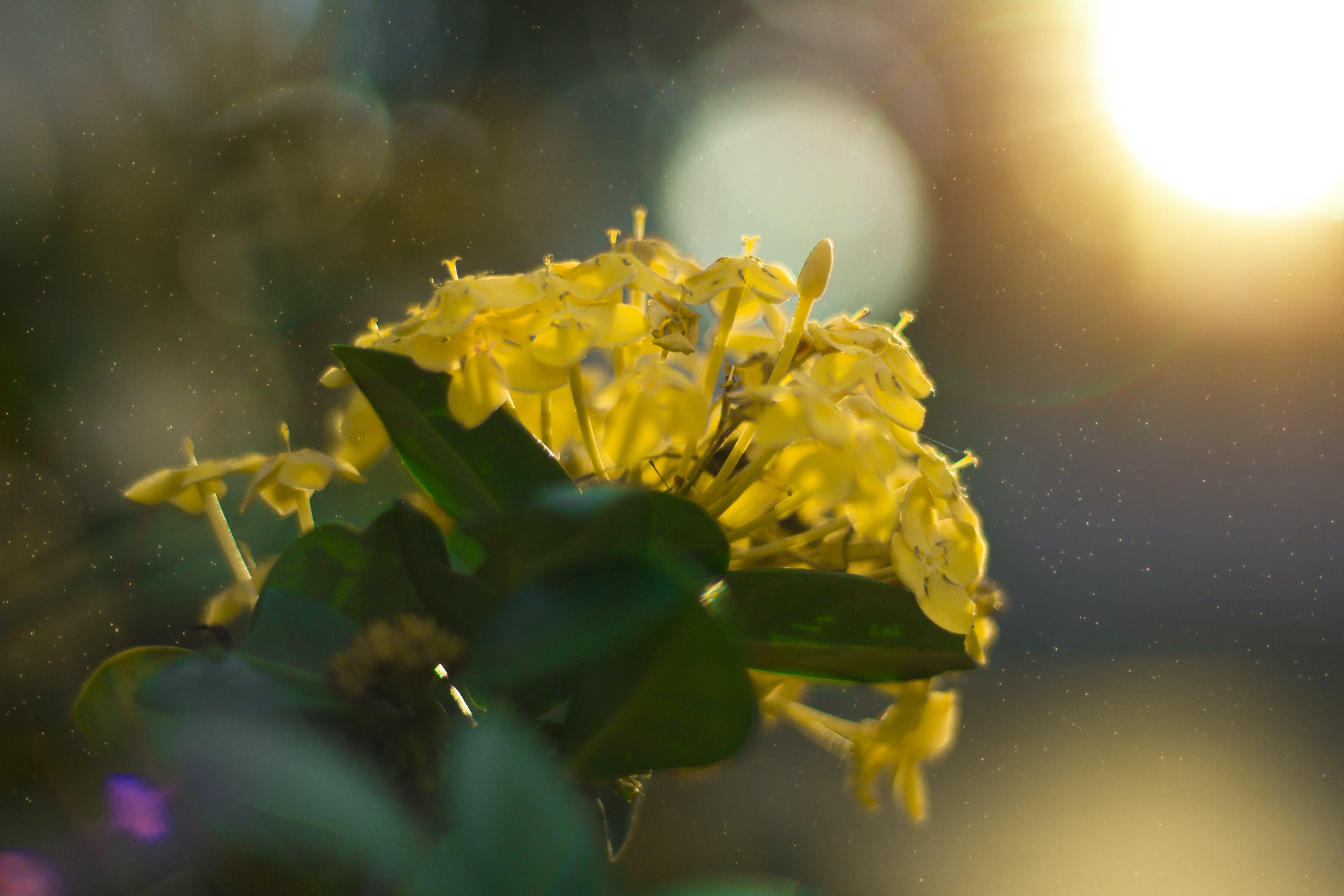 Free stock photo of beautiful flower, flower, iarongi, nature