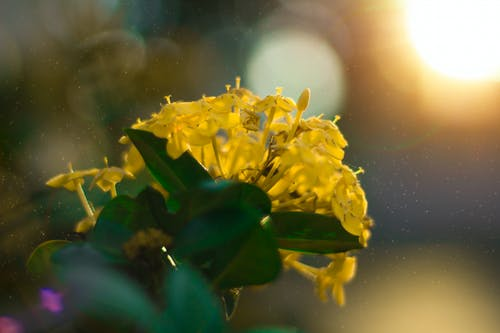 Ảnh lưu trữ miễn phí về hoa đẹp, iarongi, Thiên nhiên