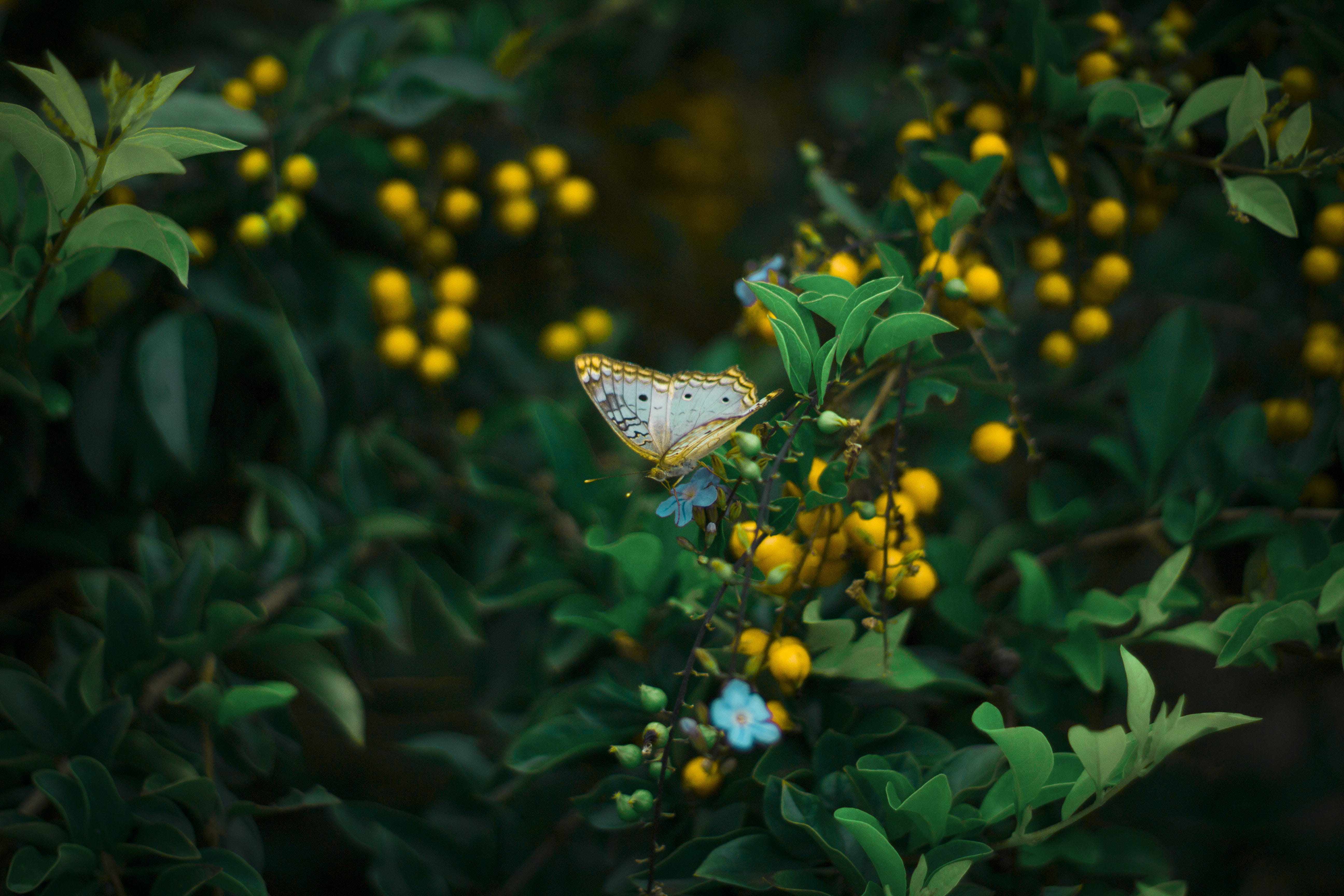 Yellow Butterfly Perching on Plant