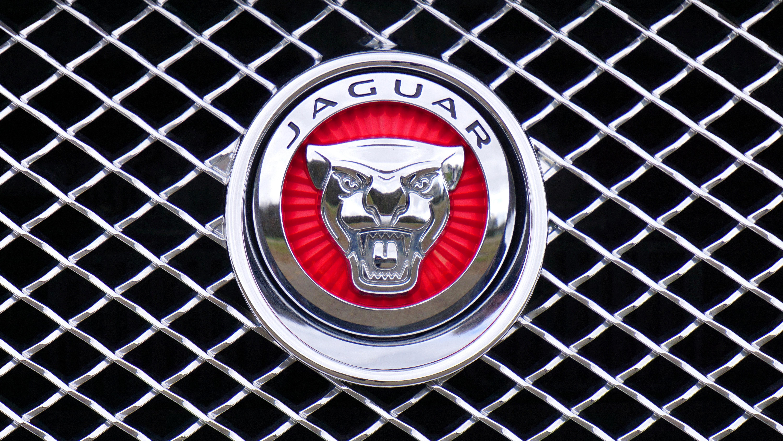 Jaguar Emblem Free Stock Photo