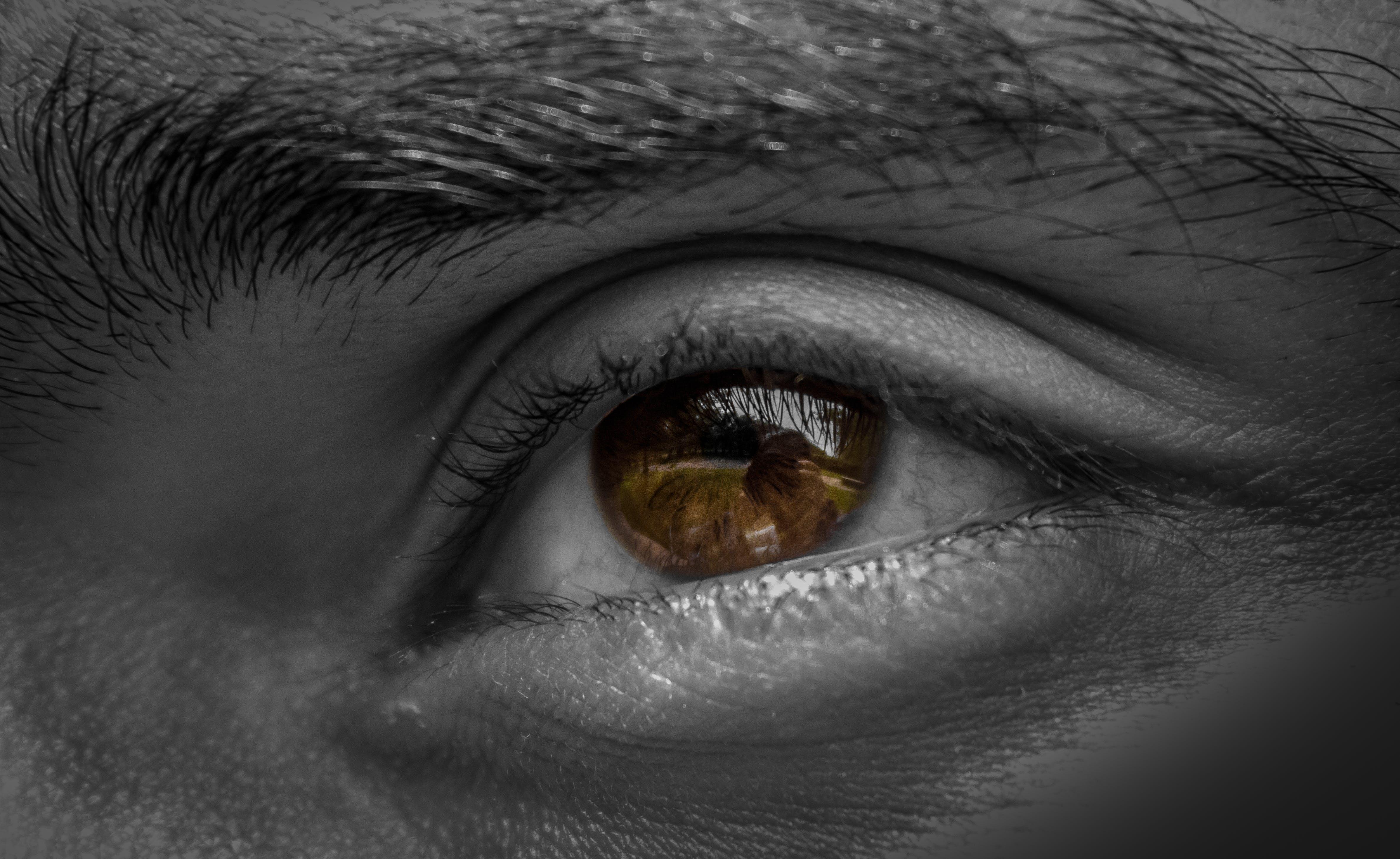 Základová fotografie zdarma na téma hnědé oči, obočí, oči, oko