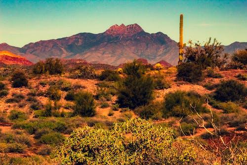 Gratis arkivbilde med arizona, ørken