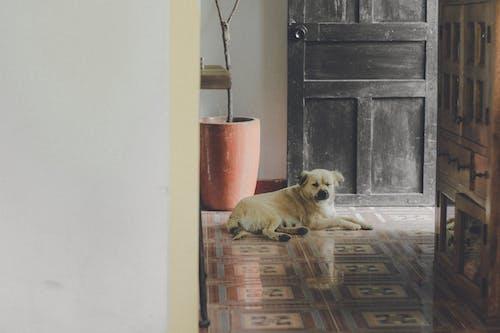White Dog Near Door