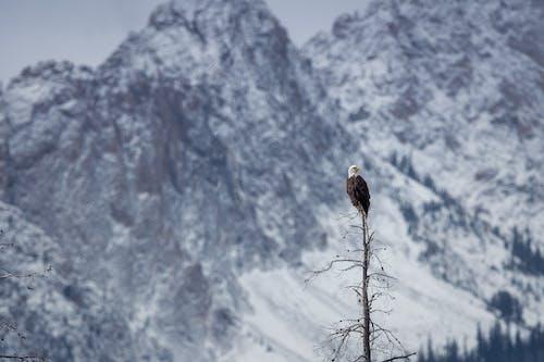 Fotos de stock gratuitas de águila, árbol, fauna, frío
