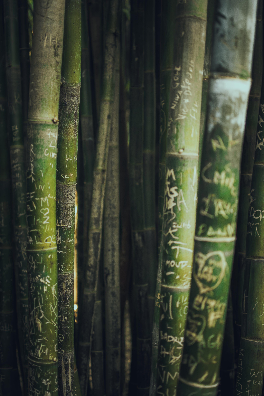 50 Bambus Fotos Pexels Kostenlose Stock Fotos