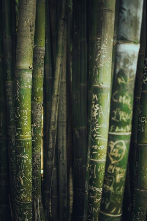 增長, 綠色, 草 的 免费素材照片