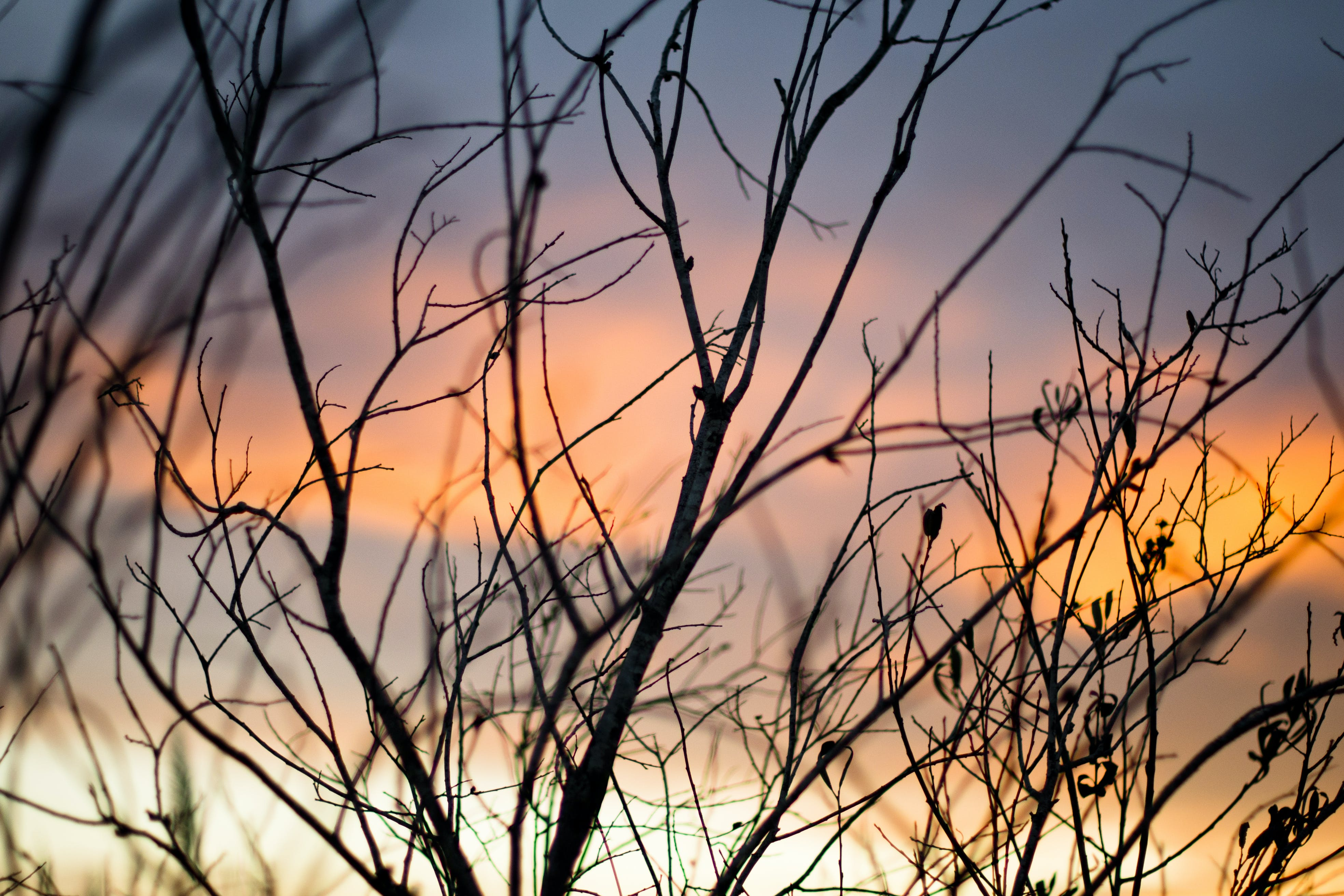 Shallow Focus Photography Of Tree Branches