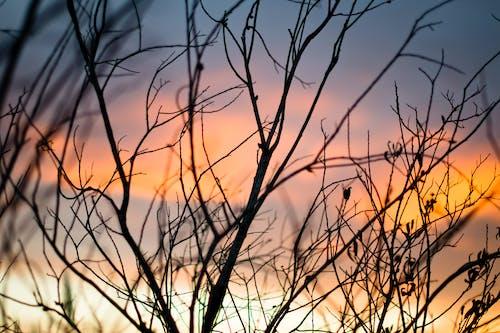 Foto stok gratis alam, backlit, bayangan hitam, Fajar