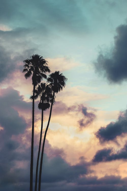 Ingyenes stockfotó ég, fák, felhők, hajnal témában