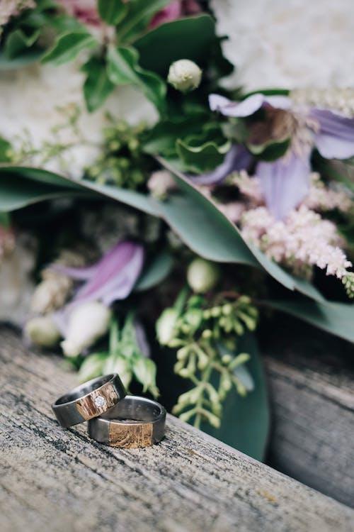 ahşap, bitki örtüsü, bulanık arka plan, bulanıklık içeren Ücretsiz stok fotoğraf