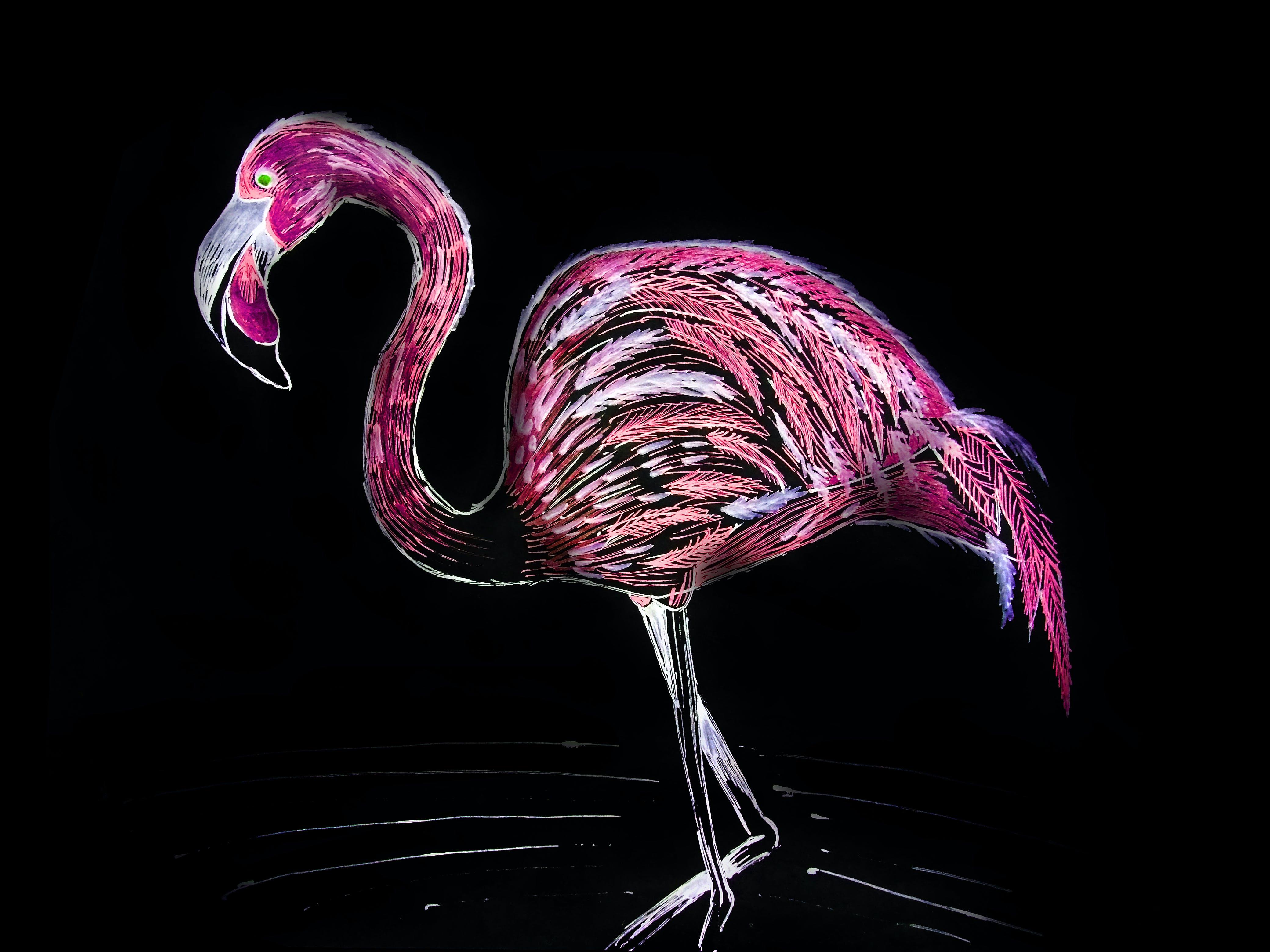 of flamingo