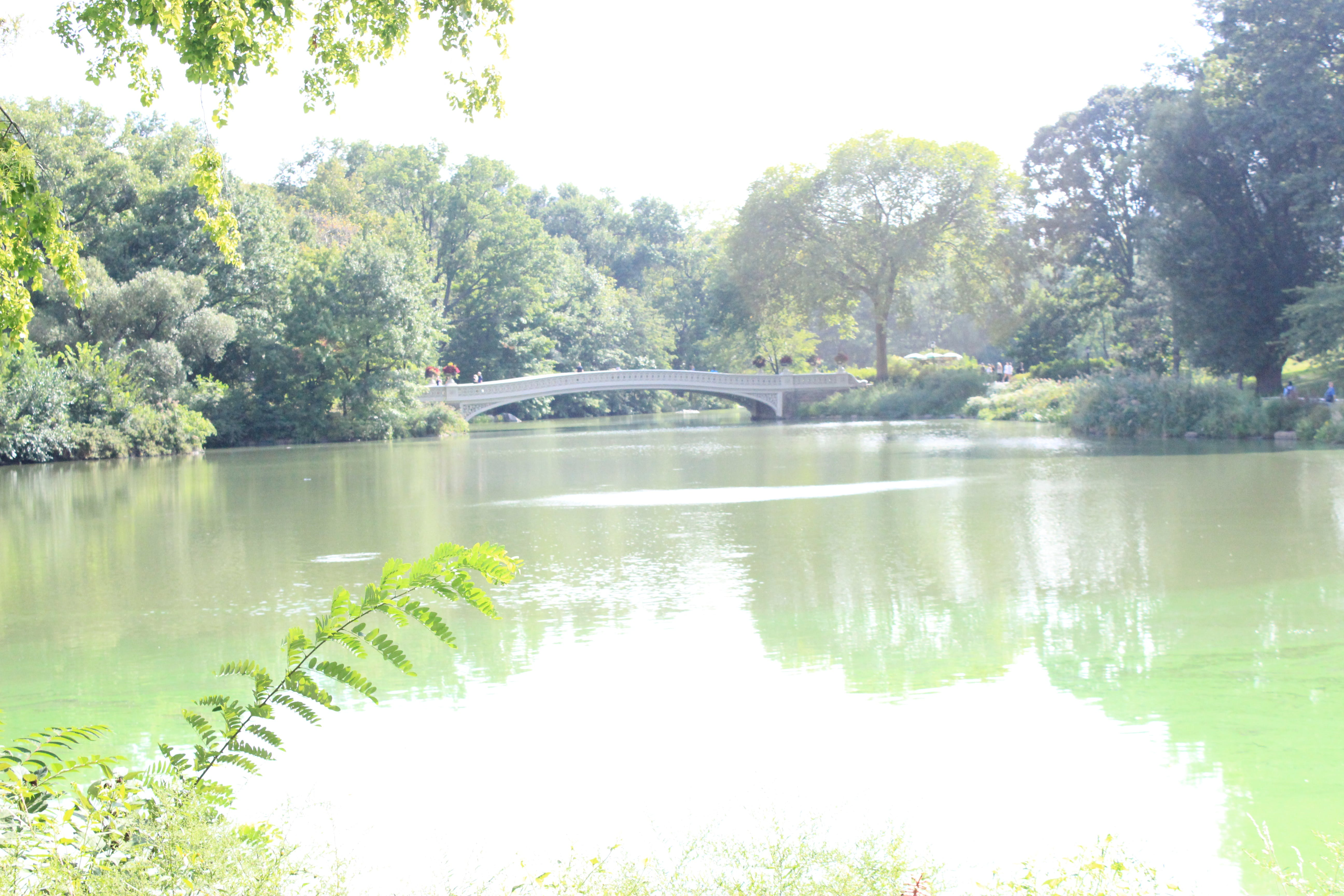 Free stock photo of central park, lake, pond, water