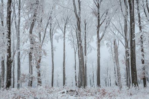 Gratis lagerfoto af forkølelse, frost, malerisk, skov