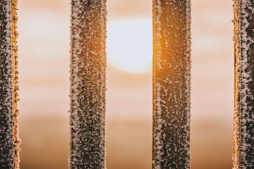 Fotobanka sbezplatnými fotkami na tému detailný záber, mráz, svitanie, východ slnka