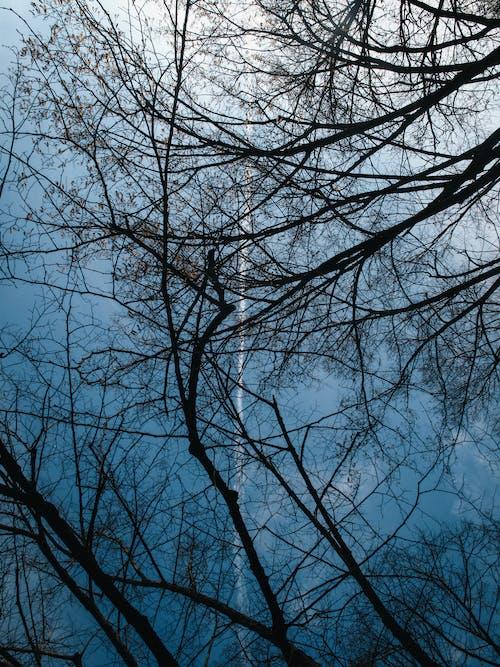 คลังภาพถ่ายฟรี ของ กลางแจ้ง, ก้าน, การถ่ายภาพมุมต่ำ, กิ่งไม้