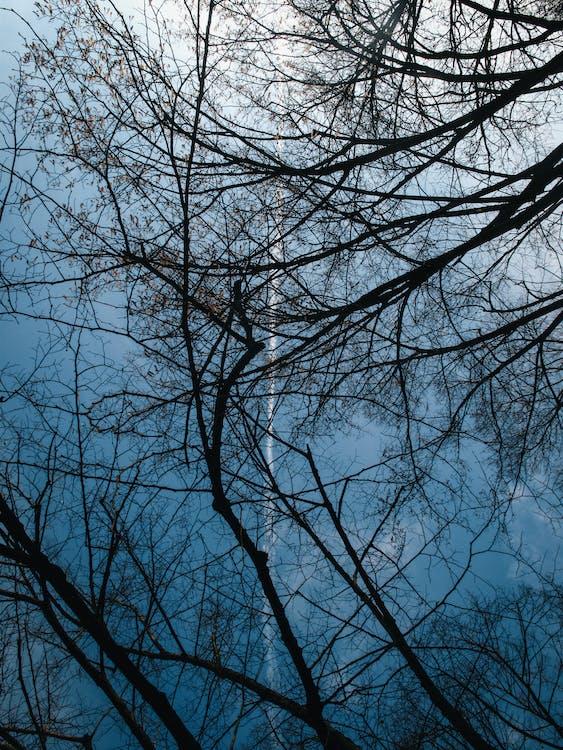 dřevo, fotografie znízkého úhlu, příroda