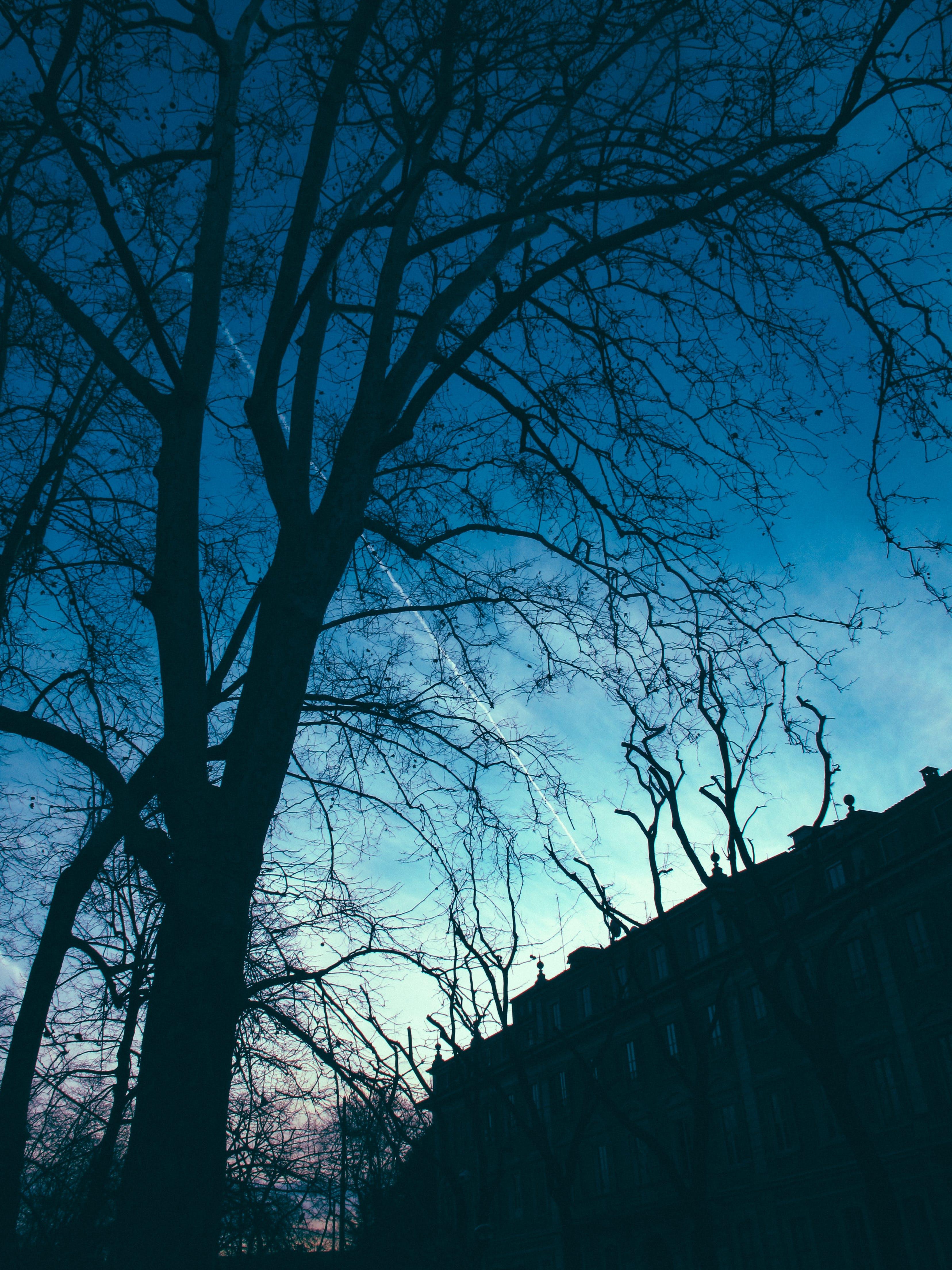 Δωρεάν στοκ φωτογραφιών με απόκοσμος, δέντρο, κλαδιά, οπίσθιος φωτισμός