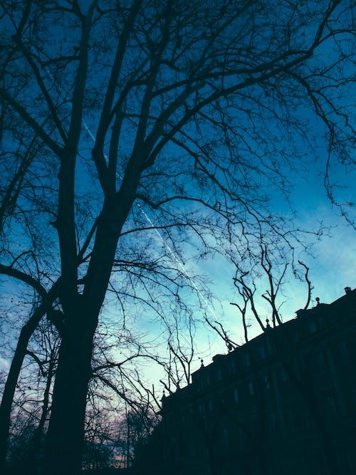 Foto d'estoc gratuïta de arbre, branques, esborronador, retroil·luminat
