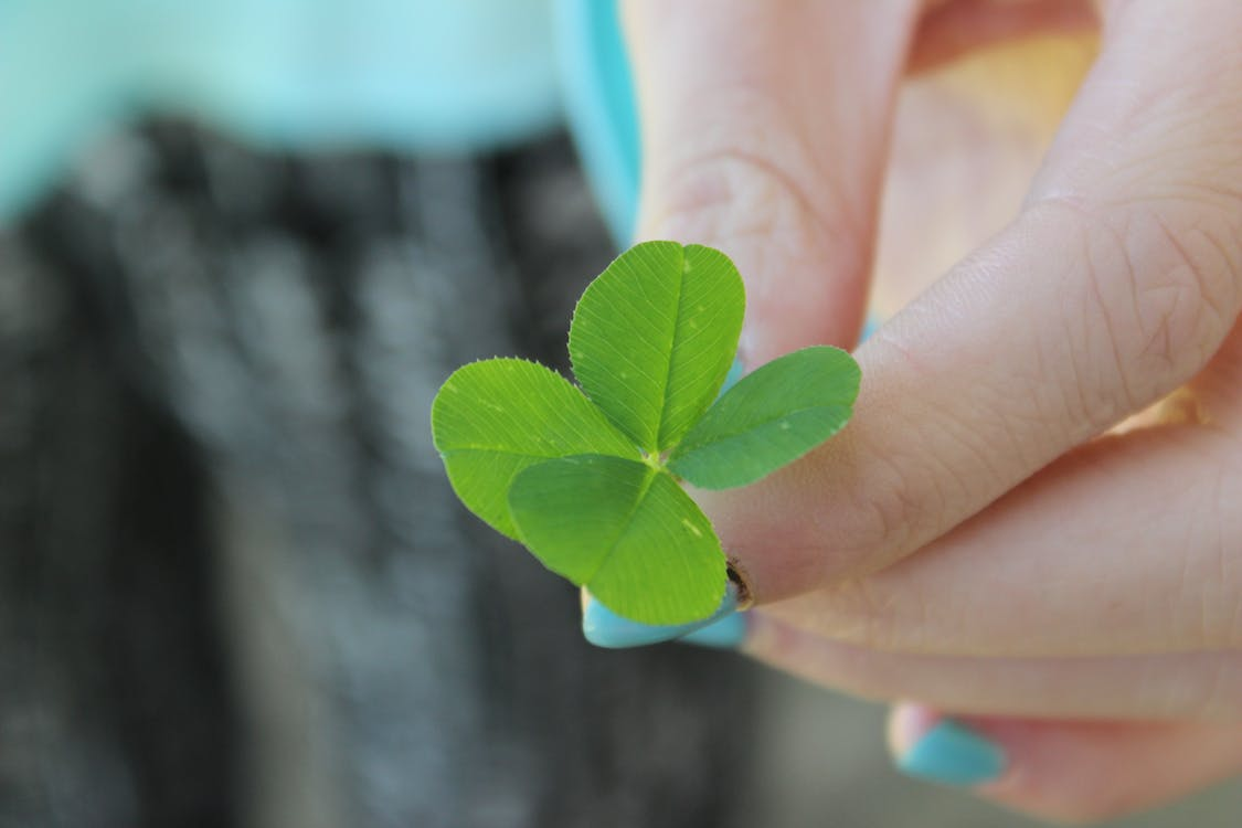 Free stock photo of 4 leaf clover, four leaf clover, green
