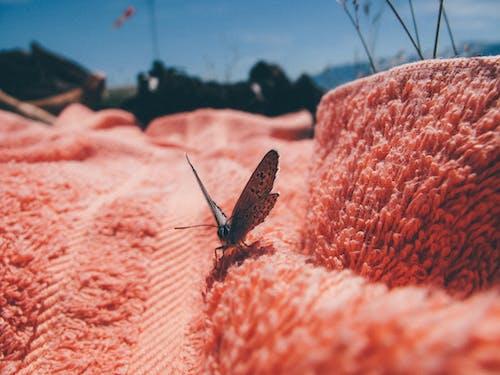 Ảnh lưu trữ miễn phí về cánh, chụp ảnh động vật, côn trùng, con vật