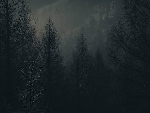 Free stock photo of dark, forest, landscape, moody