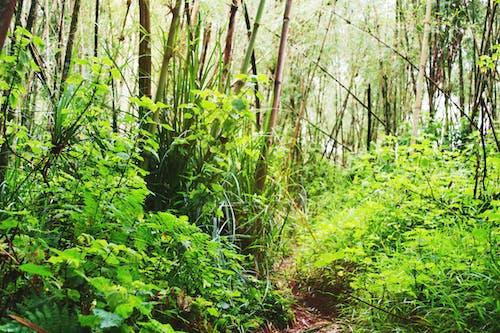 Free stock photo of bamboo tree, forest, Kenya