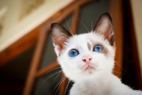 Kostenloses Stock Foto zu bezaubernd, 猫, gatto, kätzchen