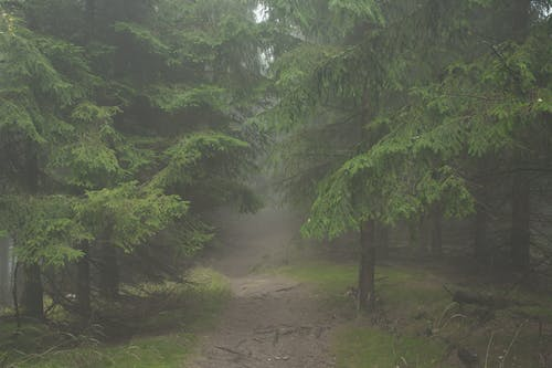 Free stock photo of fog, foggy, foot path, footpath