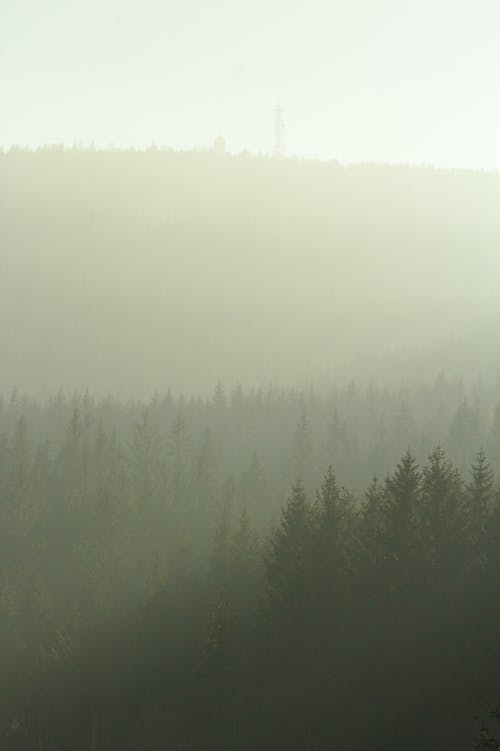 Free stock photo of fog, foggy, forest, light