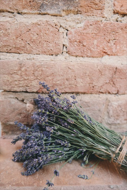 Lavender Flowers in Bloom Bouquet on Brown Bricked Surface