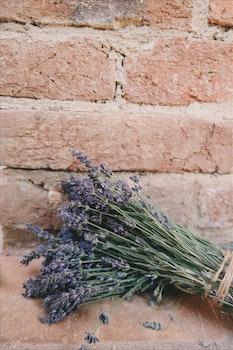 Free stock photo of flowers, bricks, pattern, colors