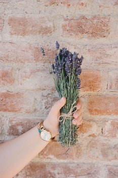 Free stock photo of hand, flowers, wall, clock
