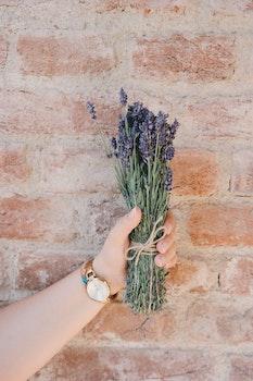 Free stock photo of hand, flowers, wall, clock