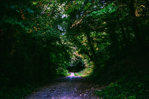 Photos gratuites de arbres, aube, bois, brillant
