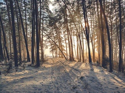 Gratis arkivbilde med årstid, forkjølelse, natur, naturskjønn