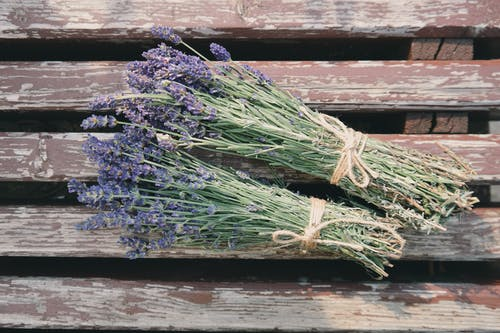 Foto stok gratis alam, alami, berkembang, bunga lavender