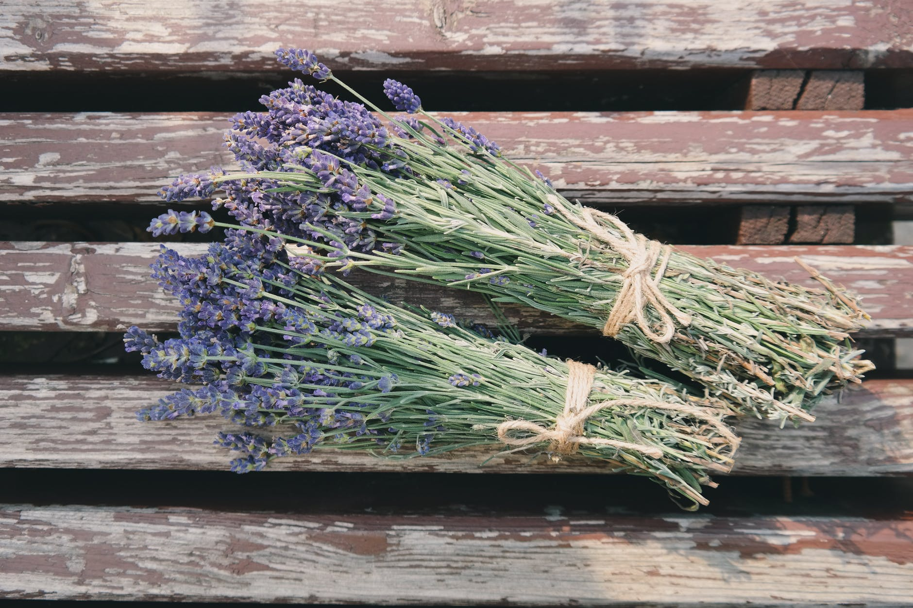 Drying Lavenders | How To Grow Lavender | A Complete Garden Season Growing Guide