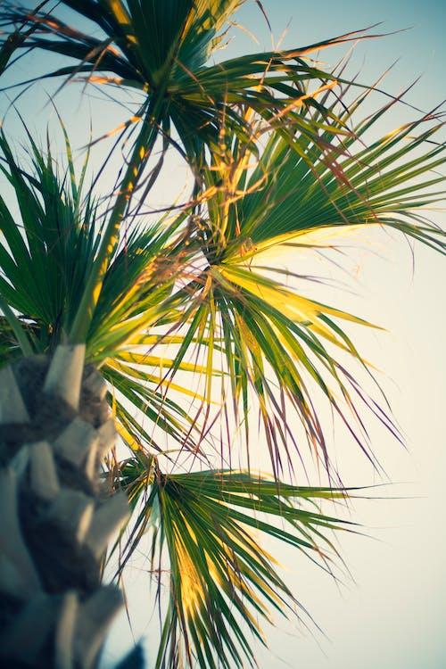 pepohonan palem, pohon palem