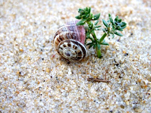 Free stock photo of plant, sand, snail shell