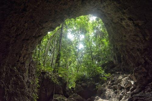 녹색, 동굴, 모험, 숲의 무료 스톡 사진