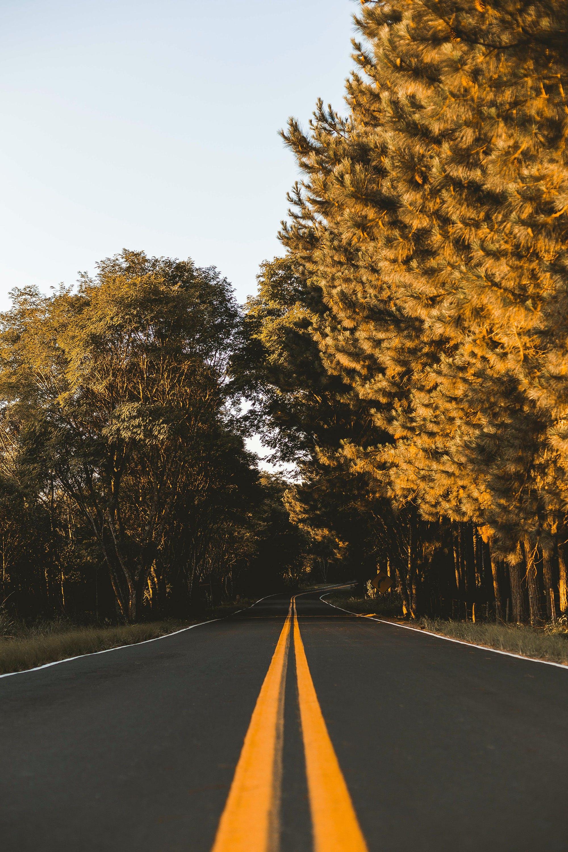 Ảnh lưu trữ miễn phí về ánh sáng ban ngày, cây, gỗ, nhựa đường