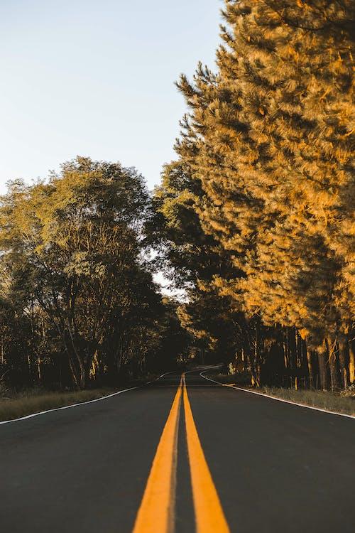 ağaçlar, asfalt, bakış açısı, gün ışığı içeren Ücretsiz stok fotoğraf