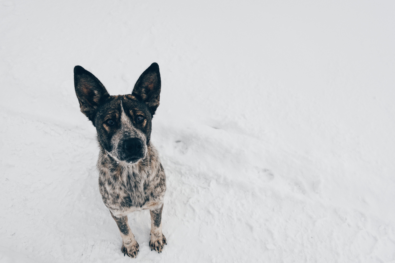 Dog On Snow Field