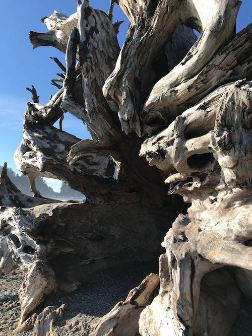 Immagine gratuita di albero, costa, costa dell'oregon, costa ovest